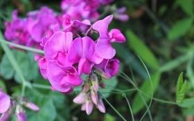 Однолетние цветы: сеем прямо в грунт