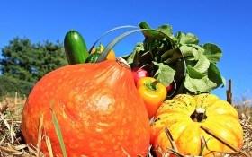 Как повысить урожайность овощей подскажет состав почвы