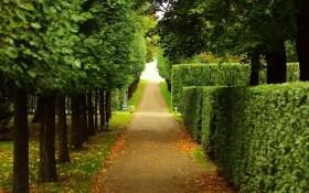 Живая изгородь: обрамление сада