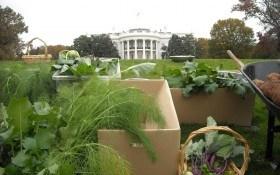 Самые необычные огороды мира: Белый Дом