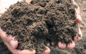Типы почв: хороша золотая середина