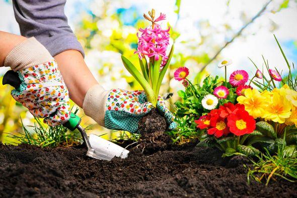 Правильное «питание» цветника: поговорим об удобрениях