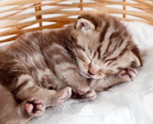 полосатый котенок спит