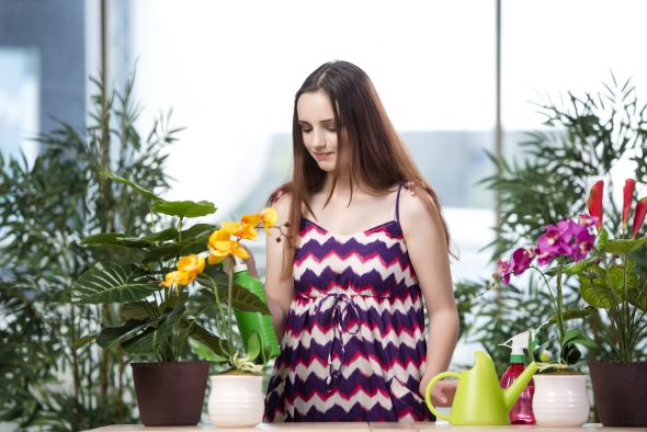 лечение домашних растений