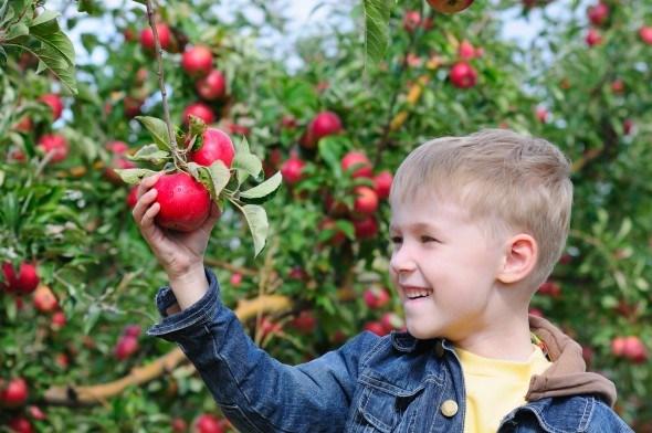 Мальчик в яблоневом саду