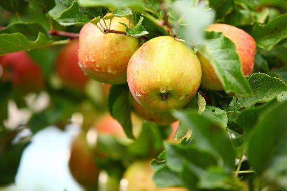 «Препарат 30 Д» поможет вырастить богатый урожай без применения химии