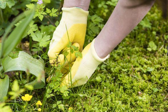 как избавится от сорняков без химии
