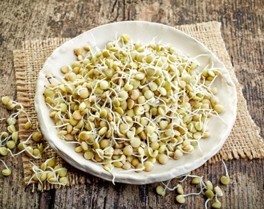 Пророщенные зерна чечевицы