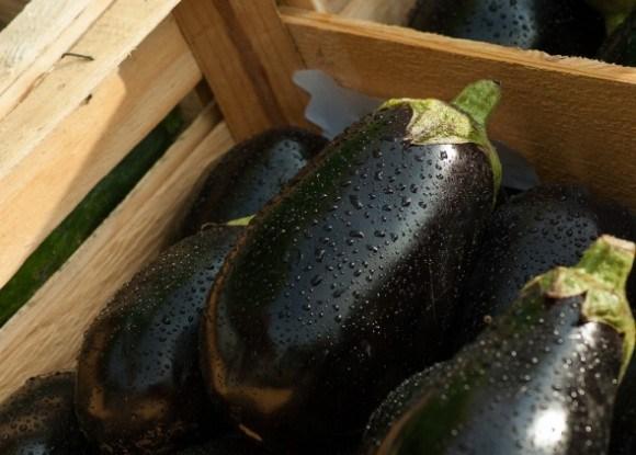 Сорта баклажана для выращивания на приусадебном участке