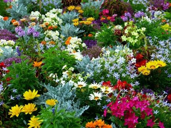 Цветники в июне