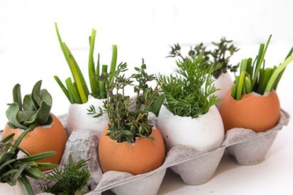 Как вырастить рассаду в скорлупе