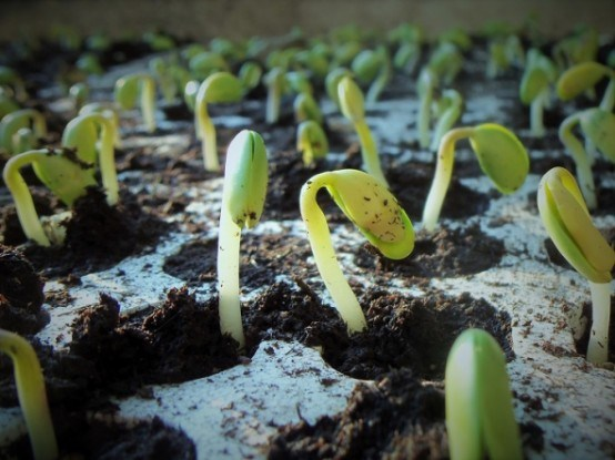 Выращивание рассады в квартире