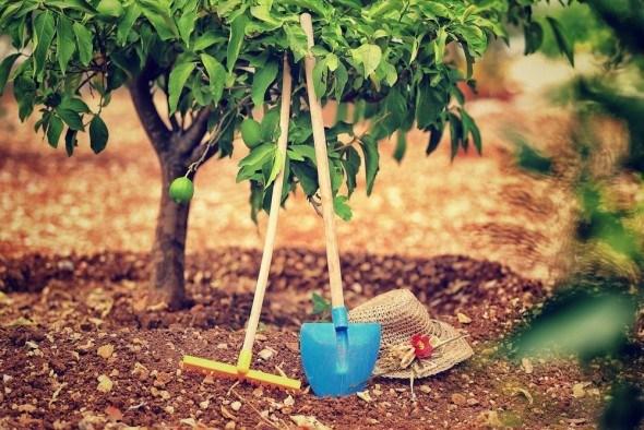 Применении органических и минеральных удобрений урожайность плодовых деревьев увеличивается от 40 до 80 % без ухудшения качества плодов