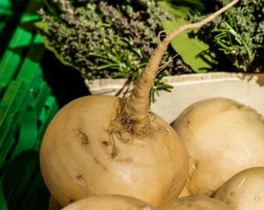 Репа: как вырастить овощ