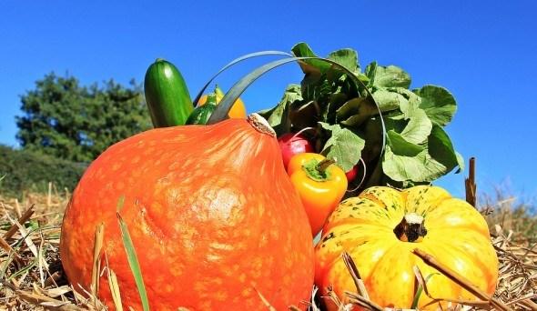 Урожай овощей на грядуке