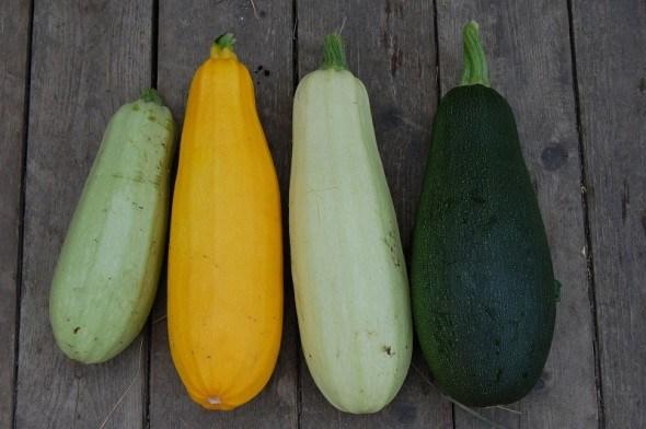 Кабачки и цуккини: особенности выращивания