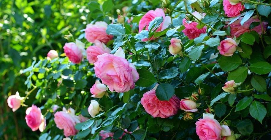 Календарь работ в цветниках в июле