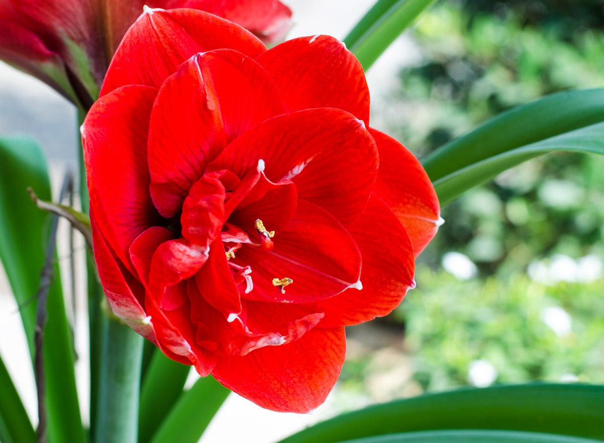 Комнатные цветы и их магические свойства
