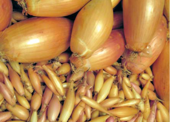 Производители посадочного лука калибруют его на 5 основ- ных фракций