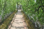 Декоративный плодовый сад