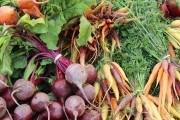 Время для уборки корнеплодов