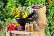 Фитотерапия травы при простуде