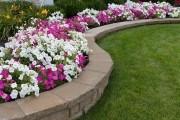 Петунии сад дизайн