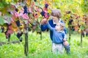 Как подготовить виноград к зиме?