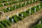 3 способа подарить «вторую жизнь» ПЭТ-бутылкам