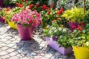 Сады и цветники в контейнерах: подбор и посадка растений