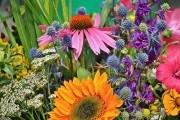 Выращиваем лекарственные травы