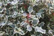 Приусадебный участок и сад зимой