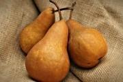 Сорта груши для зимнего хранения
