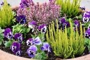 Проращивание туговсхожих семян овощных культур и цветов