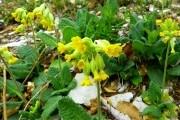Выращиваем в огороде дикорастущие целебные растения