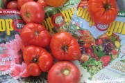 С новым вкусом! Сорта томата зарубежной селекции