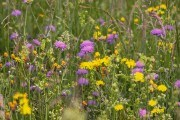 Лекарственные свойства летних трав