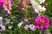 Планируем посадку цветника