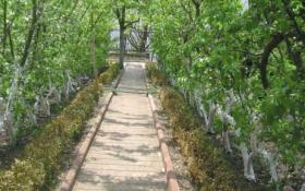 Гармония линий: декоративные формировки в плодовом саду
