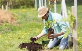 Плодово-ягодные культуры: почвенный вопрос