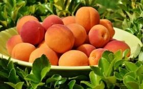 Здоровье прямо с ветки: целебные свойства вишни, черешни, сливы и абрикоса