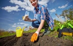 Сидераты или как восстановить плодородие земли