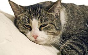 Здоровье кошки. Симптомы, которые вы должны уметь распознать