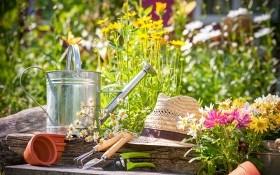Майская самооборона. Как защитить цветник от вредителей и болезней?