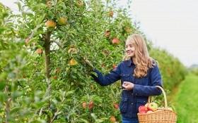 Что нужно сделать в саду в октябре?