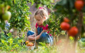 Совмещенные посевы: томаты и земляника на одной грядке