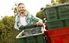Сохраним вкус лета: эффективные способы хранения винограда