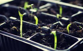 В чем выращивать рассаду, чтобы сеянцам было комфортно?
