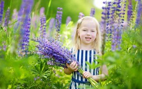 Люпин или «спящая красавица»: выращивание, размножение и декоративное применение