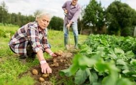 Особенности национального органического земледелия